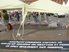 pic5 - report-toulouse-france-25-09-2012