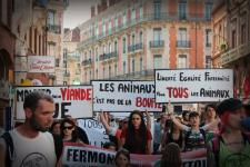 pic2-report-toulouse-france-2013-06-15