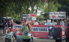 pic1-report-toulouse-france-2013-06-15